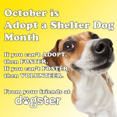 Dogster Shelter Dog Wednesday: Houndy Waited 10 Long Years But Finally Went Home