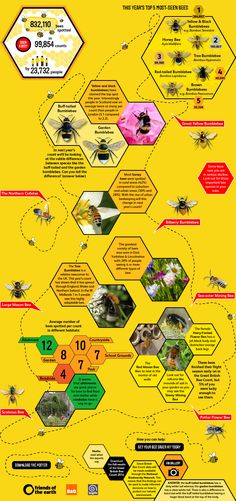 The Great British Bee Count 2014 Results. Get a FREE poster. Discover 2014's top-spotted bees - and where you spotted them. #bees #insect #nature #garden #infographic