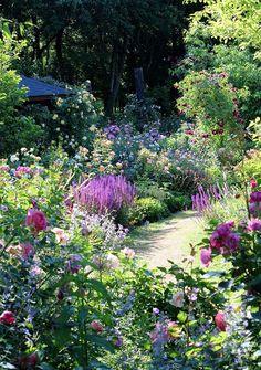 Back Gardens, Outdoor Gardens, Rustic Gardens, Amazing Gardens, Beautiful Gardens, Beautiful Flowers, Beautiful Scenery, Cottage Garden Plants, Cottage Garden Borders