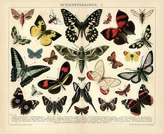 Schmetterling Antique Butterflies Antique Framed Wall Art giclee reproduction print on fine paper that will not fade. Available in different sizes, unframed or framed in beautiful vintage wood frame that complements antique print. Custom sizes available. Made in USA