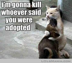 You Are Not Adopted