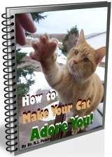 How to Make Your Cat Adore You!  -  Transform your aloof cat to a loving and adoring cat with these techniques that truly work!