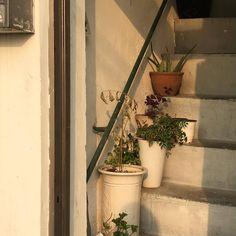 photography, aesthetic et sun image sur We Heart It Fall Inspiration, Design Inspiration, Beige Aesthetic, Aesthetic Photo, Aesthetic Plants, Aesthetic Korea, Photography Aesthetic, Flower Aesthetic, Aesthetic Images
