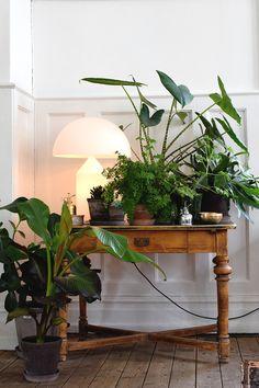 Senaste trenden inom gröna växter: Plant Gang – gruppera blommor och växter
