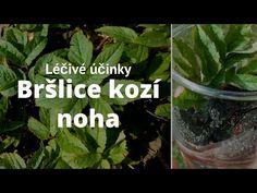 Víte, co je to za bylinku? Alternative Medicine, Ale, Herbalism, Preserves, Herbs, Vegetables, Youtube, Plants, Garden
