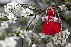 Мартеница: On the first day of March and for a few days afterwards, Bulgarians exchange and wear white and red tassels. In Bulgarian folklore the name Baba Marta (in Bulgarian баба Марта meaning Grandma March) is related to a grumpy old lady whose mood swings change very rapidly. This is an old pagan tradition that remains almost unchanged today. Many people wear more than one martenitsa. The tradition calls for wearing the martenitsa until the person sees a stork or a blooming tree.
