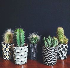 cacti - black and wh