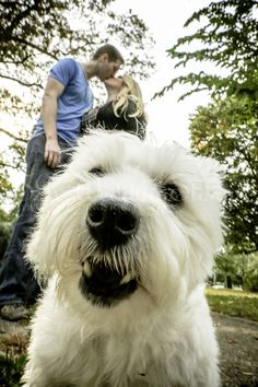 Couple Kissing with their pet dog photographed by Wedding Photographer Sam…