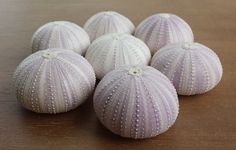 Sea Urchins, Sea Urchin, Purple Sea Urchin, Beach Decor, Sea Urchin Shell, Seashells, Urchin by NatalieHaganDesigns on Etsy https://www.etsy.com/listing/232791696/sea-urchins-sea-urchin-purple-sea-urchin