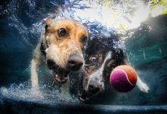 Foto Underwater dogs: il calendario dei cani sott'acqua - 1 di 15 - Repubblica.it