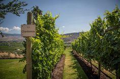 Wine and views. Perfection. #okagagan #bcwines . . . . . . .   #britishcolumbia #hellobc #travelbc #explorebc #explorecanada #canada #ilovebc #mountains #hikebc #lovewhereyoulive #naturelovers #planetdiscovery #thankyoucanada #enjoycanada @hellobc #wine #vino #winelover #instawine #winetasting #winelovers #vineyard #sommelier Mountain Photography, Wine Tasting, British Columbia, Railroad Tracks, South America, Discovery, Vineyard, Europe, Canada