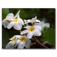 Image result for flower lei
