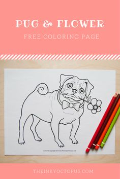 Pug Coloring Page We Love This Illustration Little Dog
