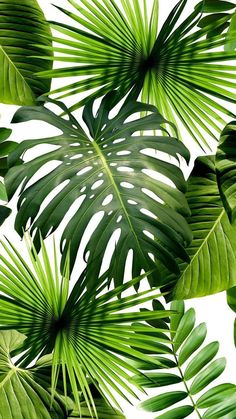Plants and green leaves indoors have been very popular lately. Our 3D Rainforest Banana Leaves Mural Wallpaper features a natural vibrancy of the green tropical forest. It will make a beautiful accent wall whether in the living room, bedroom or in the office. This rainforest leaves mural are perfect for the jungle and bohemian inspired interiors. Motif Tropical, Tropical Decor, Tropical Leaves, Tropical Plants, Tropical Forest, Tropical Fabric, Tropical Interior, Tropical Pattern, Palm Wallpaper