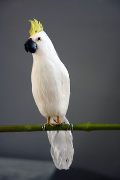 Beautiful White Cockatoo - A Fabulous Artificial Bird - View All - Home Accessories