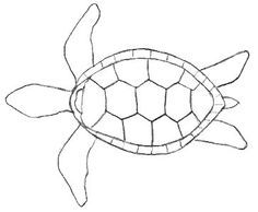 Here are some turtle drawings in their easiest format. Start by copying the outline and progress on to the other easy drawings provided. Turtle Outline, Animal Outline, Wood Turtle, Ceramic Turtle, Turtle Painting, Dot Painting, Turtle Sketch, Turtle Pattern, Tattoo Outline