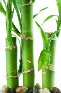 According to Chinese tradition, the number of bamboo stalks have different meanings.