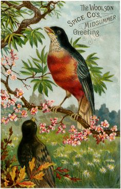 Vintage Advertising Bird Image! - The Graphics Fairy