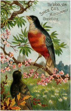 advertising ephemera with bird