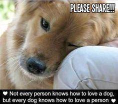 .Loving puppy