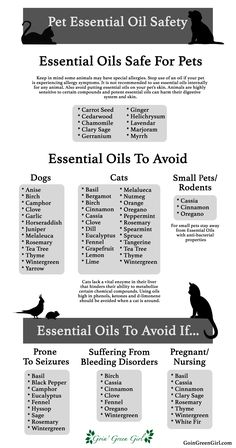 oil for cats Pet Essential Oil Safety Hey guys! Do you like essential oils, not sure which ones are safe for your lovely pets? A list compiled as a quick and easy guide for your reference! Dog Safe Essential Oils, Essential Oil Safety, Essential Oil Diffuser Blends, Young Living Essential Oils, Oils For Dogs, Young Living Oils, Aromatherapy Oils, Doterra Essential Oils, Myrrh Essential Oil