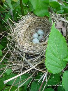 I love bird nests.
