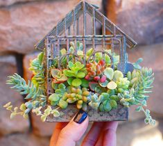 "311 Likes, 5 Comments - San Diego Succulents & Classes (@insucculentlove) on Instagram: ""✨NEW✨ Succulent Birdcage DIY kits  shop the ✨link in bio✨ to make one of these cuties."""