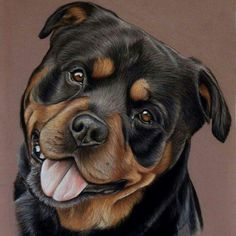 how to draw a rottweiler face Cute Dogs And Puppies, Baby Puppies, Dog Paintings, Dog Portraits, My Animal, Dog Art, Animal Drawings, Dog Breeds, Cute Animals