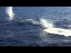 Amazing whale watch a few days ago in Maui, Hawaii