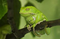 Nice frog