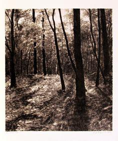 April Gornik ~ The Woods, 2008 (lithograph)