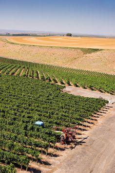 The Benches Vineyard | #WA #WAWine #longshadowsvintners #wine #vineyard #Wallula #WallaWalla