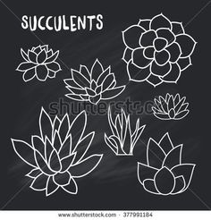 Graphic Set of succulents isolated on chalk board for design of cards, invitations. Vector illustration - stock vector