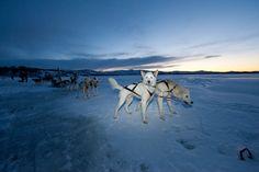Husky Hundeschlittenfahrt im Winter: Erfahrungsbericht zu Husky Hundeschlitten fahren in Tromsø, Villmarkssenter in Norwegen mit Huskies.