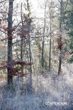 365 Tage Fotochallenge: Tag 384 - Winterwald