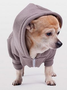 American Apparel - Pewter Flex Fleece Dog Zip Hoodie - AA has dog clothes?! I am in big trouble!
