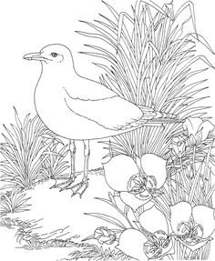 Free Printable Coloring PageMaine State Bird and Flower Black