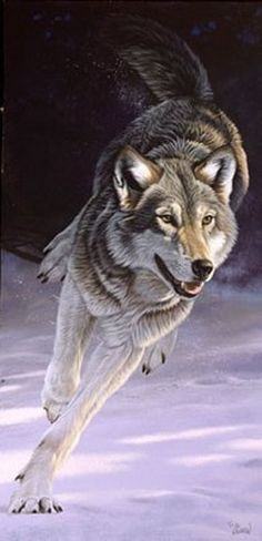 Gray wolf: Al Agnew : American Artist and Conservationist. Wolf Spirit, Spirit Animal, Wolf Pictures, Animal Pictures, Beautiful Creatures, Animals Beautiful, Wolf Hybrid, Wolf Husky, Wolf Love