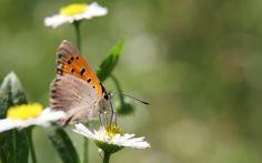 Butterfly - Beautiful butterfly:)