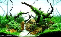 2011 AGA Aquascaping Contest - Entry #45