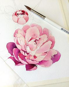 pink and purple watercolor flower Beginning Paper-moulin du Roy,grain fin Paints-White nights Painting & Drawing, Watercolour Painting, Watercolors, Peony Drawing, Peony Painting, Tattoo Watercolor, Watercolor Portraits, Watercolor Landscape, Watercolor Cards