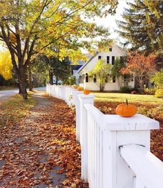 80 Elegant Ways to Decorate for Fall - The Glam Pad Fall Thanksgiving Halloween Autumn Decorating ideas outdoor front door interior design tablescapes table settings pumpkins flowers White Picket Fence, White Fence, Autumn Aesthetic, Autumn Decorating, Decorating Ideas, Baby In Pumpkin, Of Wallpaper, Greece Wallpaper, Autumn Home