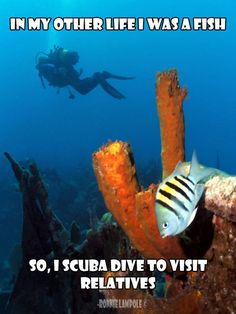 When I heard about Nautilus the scuba diving company I was extremely intrigued by the job descriptive with many opportunities to seek. Scuba Diving Quotes, Scuba Diving Gear, Sea Diving, Cave Diving, Mexico Vacation, Cruise Vacation, Real Life Mermaids, Diving School, Diver Down