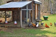 If chickens and a chicken coop is in your future then we have found 13 lessons for you from an experienced chicken coop owner. What I have learned through the…