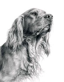 Animal Art Adventures: ORIGINAL GRAPHITE PENCIL DRAWINGS