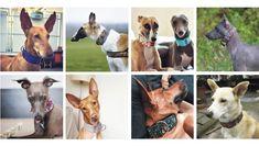 chrti, podenkové, kříženci Dog Collars, Scooby Doo, Animals, Fictional Characters, Art, Wolves, Art Background, Animales, Animaux