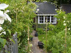 June garden by milles, via Flickr