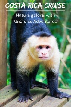 Sloths, snakes, monkeys and more? Oh, yes, we saw them all on our Costa Rica cruise (errr... uncruise) with UnCruise Adventures!