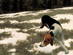 Hound in Field by Alex Colville, 1958