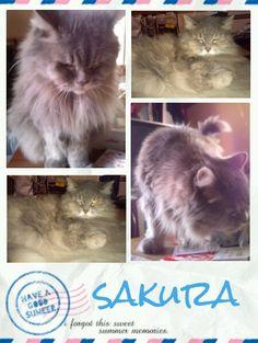 愛猫さくら姫 SHOOP+FACTORY(シュープ・ファクトリー)@オーナーブログ-131ページ目